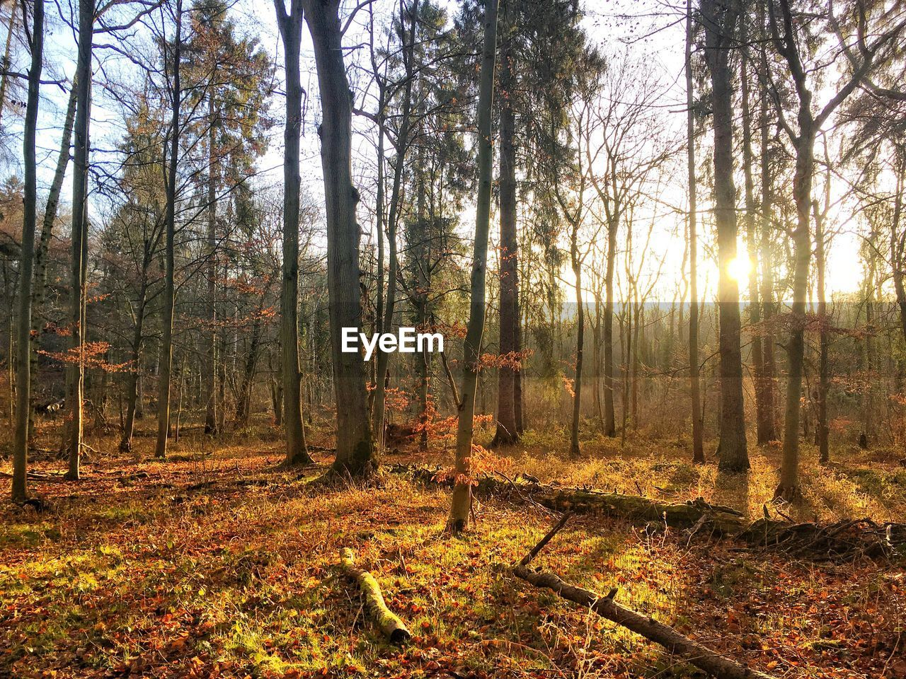 forest, tree, tranquil scene, nature, tranquility, tree trunk, woodland, scenics, beauty in nature, no people, landscape, change, day, outdoors, growth, autumn, sky