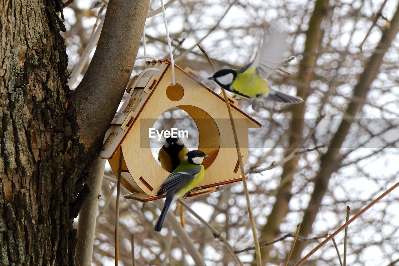 LOW ANGLE VIEW OF BIRDS PERCHING ON TREE