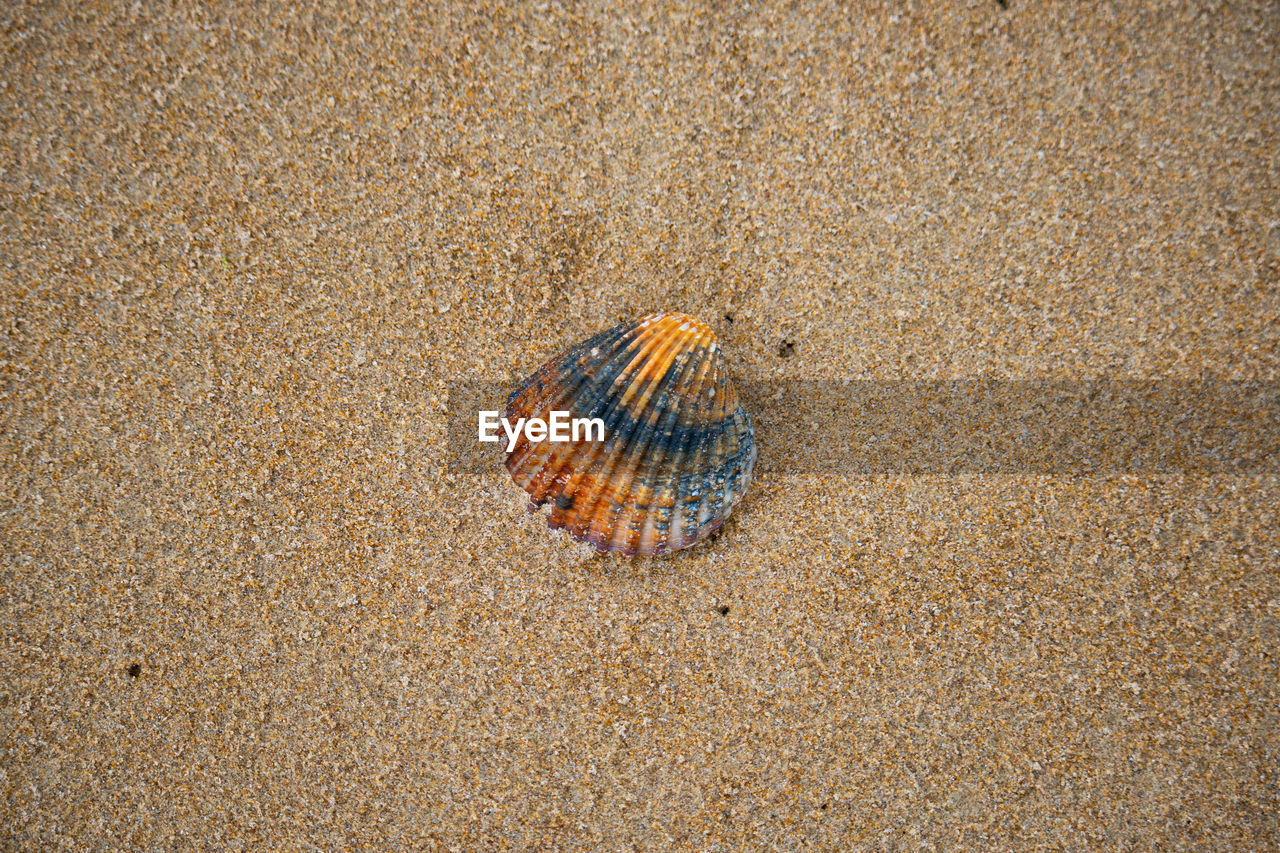 animal wildlife, sand, beach, animal, animal themes, land, shell, animals in the wild, one animal, nature, close-up, animal shell, sea, no people, day, crustacean, crab, marine, beauty in nature, high angle view, outdoors