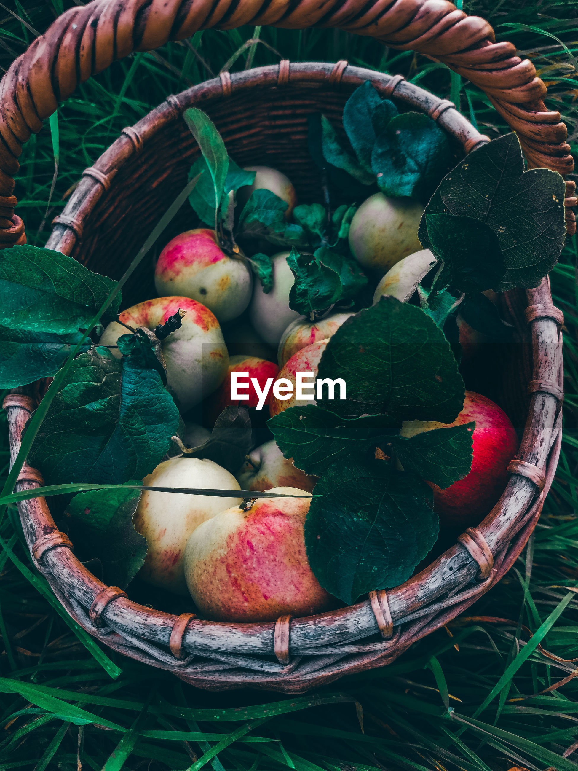 HIGH ANGLE VIEW OF FRESH FRUITS IN BASKET