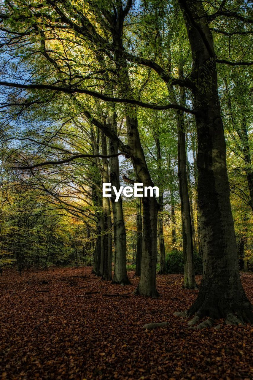 autumn, tree, leaf, nature, forest, outdoors, scenics, day, no people, beauty in nature