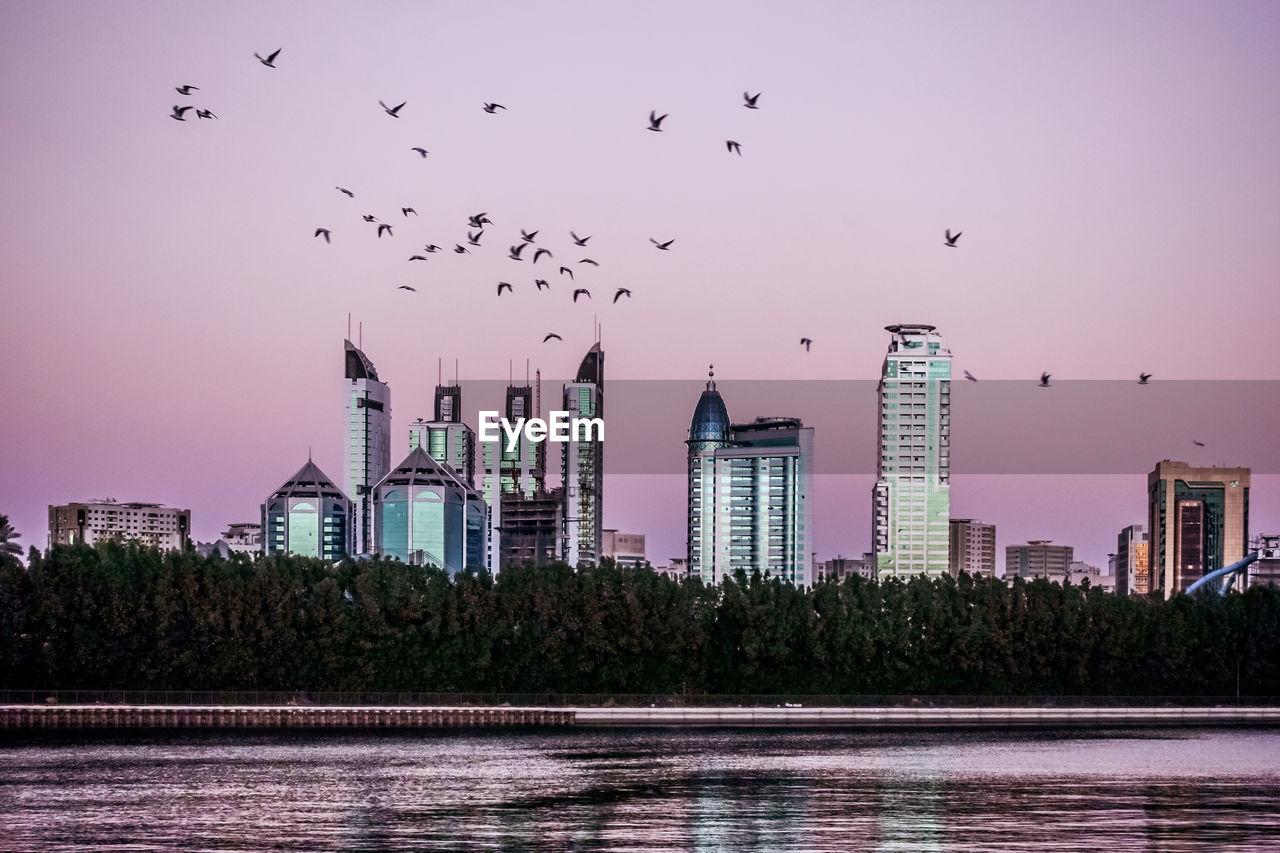 Flock Of Birds Flying Over Modern Buildings In City At Sunset