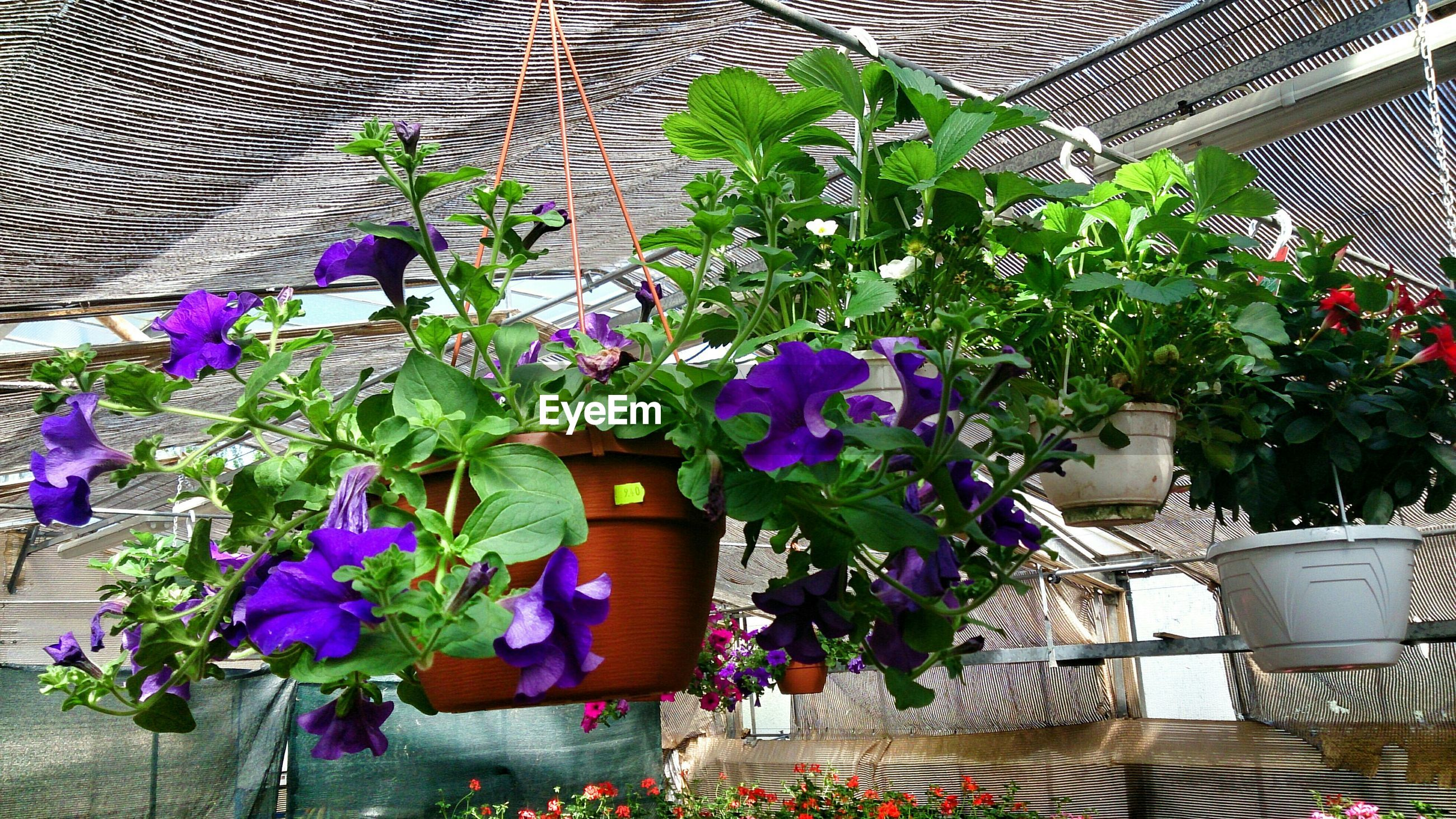 Potted flower plants hanging in plant nursery