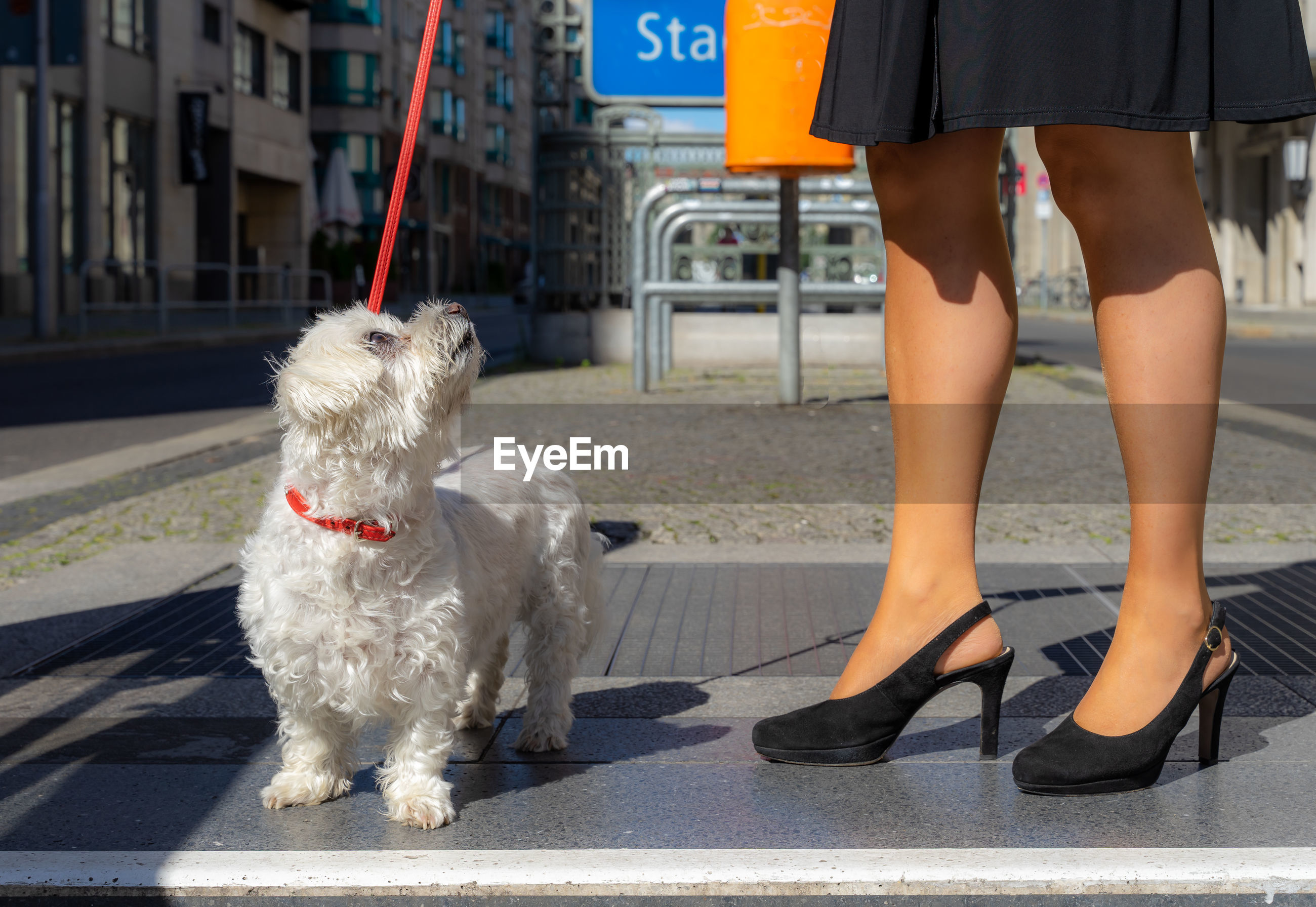 Low section of person with dog standing in city