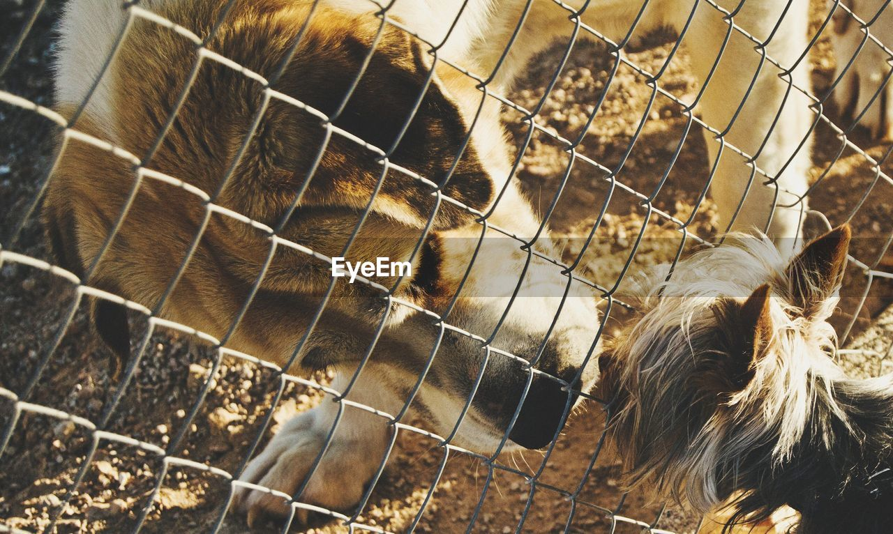 Close-Up Of Dog Behind Fence Looking At Puppy