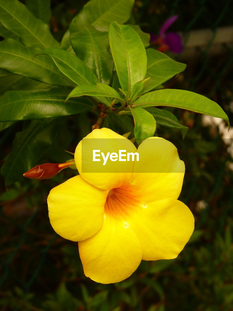flower, petal, beauty in nature, yellow, nature, growth, fragility, freshness, flower head, plant, outdoors, focus on foreground, blooming, close-up, no people, day, leaf