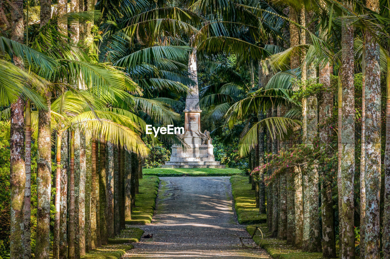 plant, tree, tropical climate, nature, palm tree, no people, architecture, growth, direction, day, land, statue, outdoors, sculpture, tranquility, art and craft, footpath, the way forward, travel destinations, city, treelined, ornamental garden
