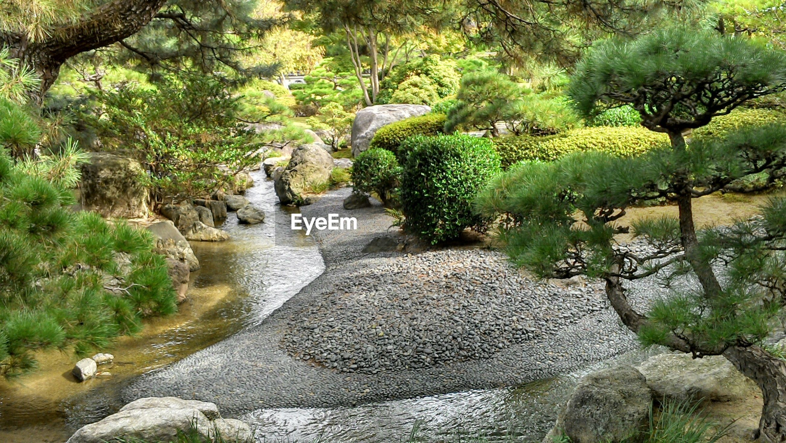 water, tree, nature, growth, plant, beauty in nature, tranquility, green color, rock - object, tranquil scene, river, scenics, day, stream, animal themes, outdoors, animals in the wild, pond, sunlight, no people
