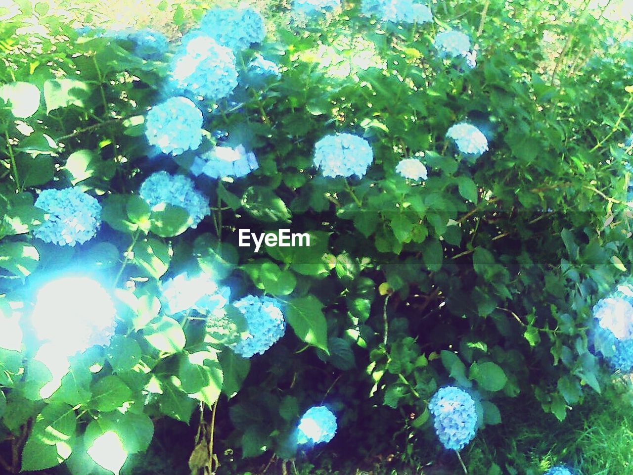 growth, leaf, plant, green color, nature, beauty in nature, day, outdoors, no people, fragility, freshness, ivy, close-up, tree