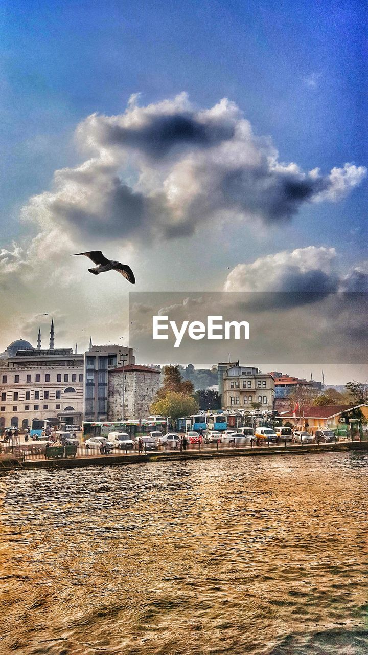 built structure, architecture, building exterior, cloud - sky, bird, sky, animals in the wild, animal themes, vertebrate, water, animal, animal wildlife, one animal, flying, city, building, nature, day, no people, outdoors, cityscape, seagull
