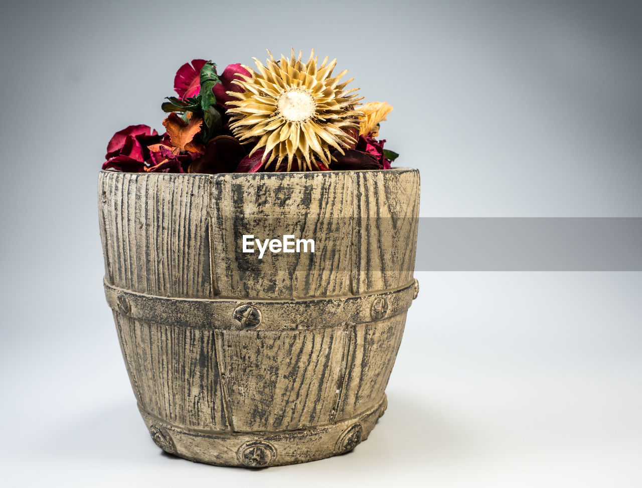 flower, plant, flowering plant, close-up, container, freshness, studio shot, nature, still life, indoors, white background, beauty in nature, focus on foreground, red, copy space, holding, inflorescence, vulnerability, flower head, cut out
