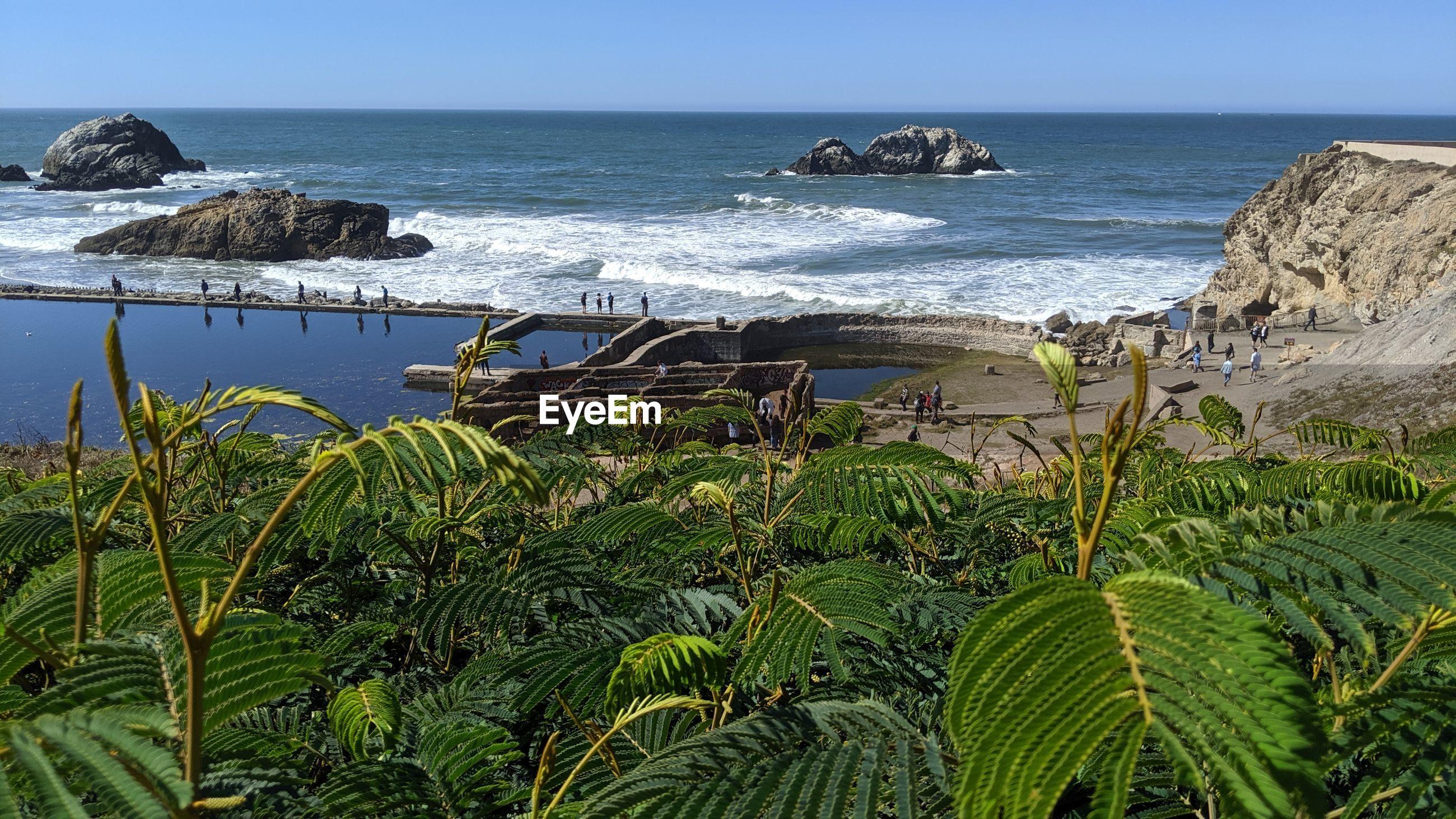 PLANTS GROWING ON BEACH