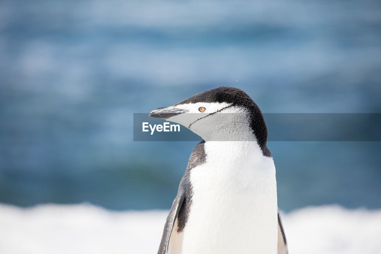 Close-Up Of Penguin Perching Against Sea