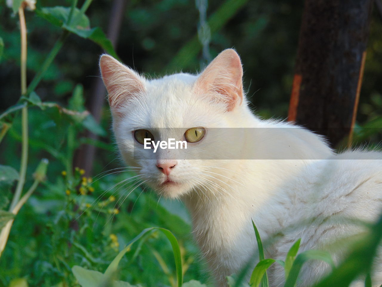 pets, cat, domestic cat, domestic, domestic animals, animal themes, animal, feline, mammal, one animal, vertebrate, plant, close-up, whisker, white color, nature, focus on foreground, day, no people, portrait, outdoors, animal head