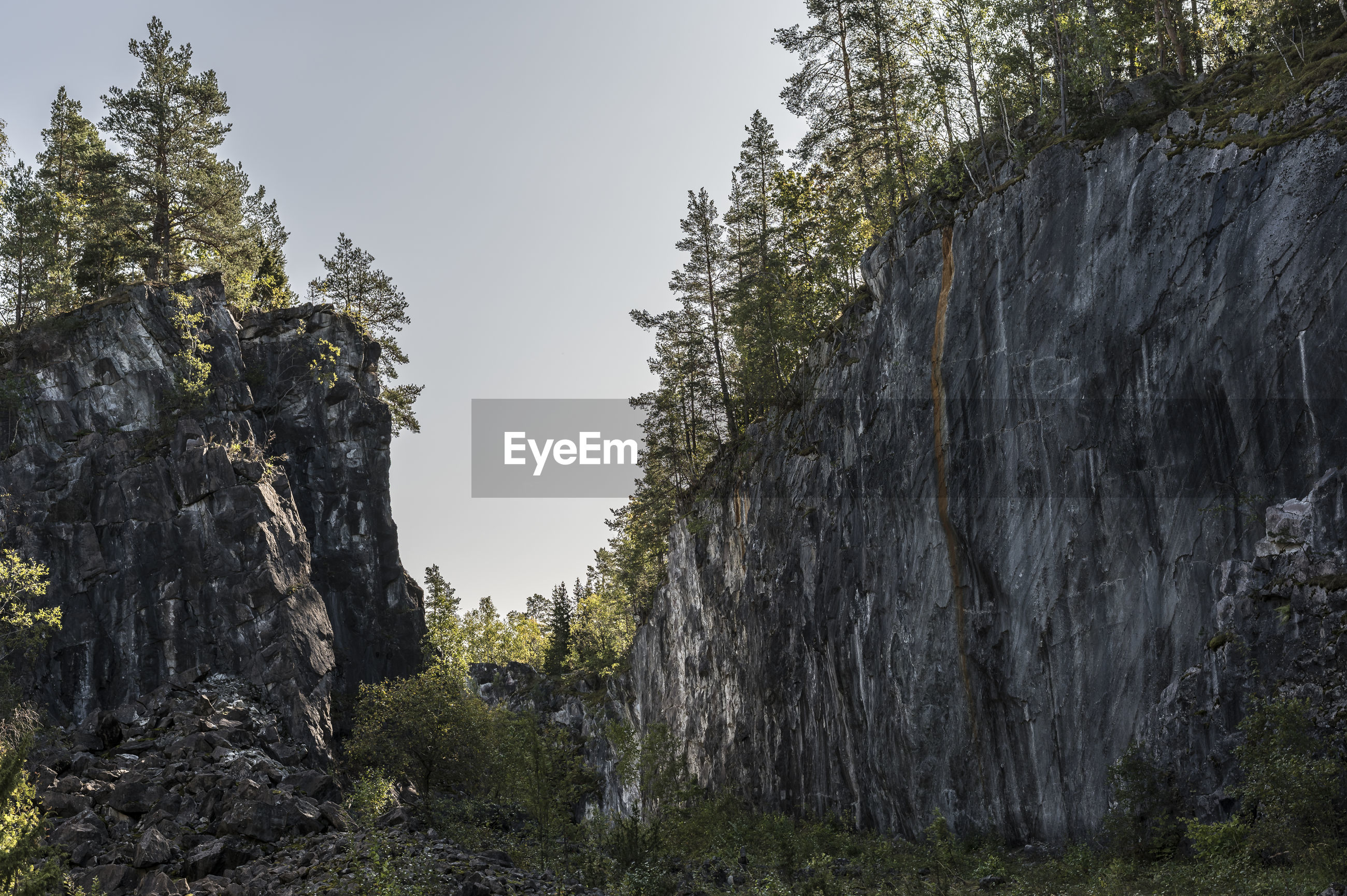 Low angle view of trees on rock against sky