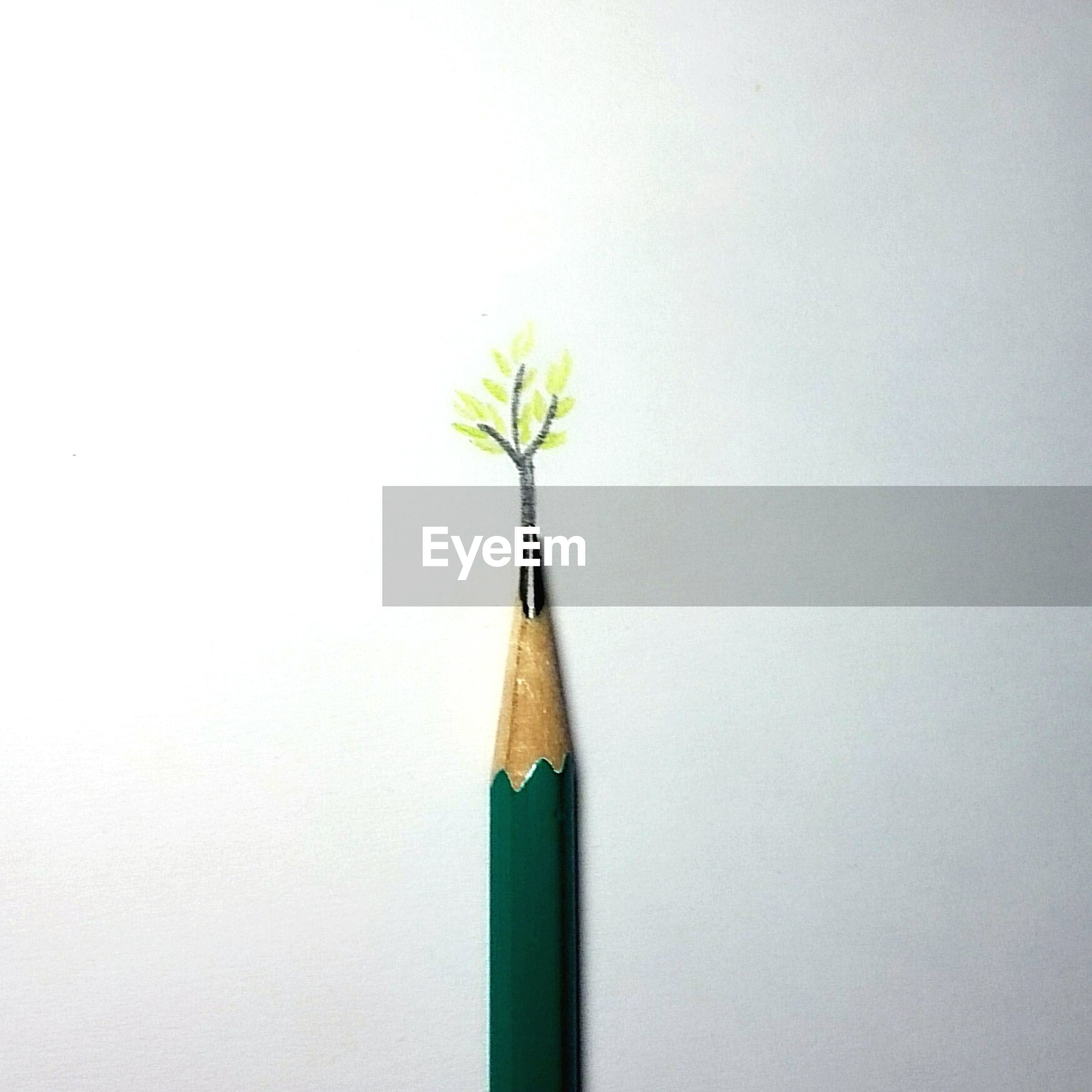 studio shot, copy space, white background, still life, yellow, close-up, multi colored, wall - building feature, indoors, no people, simplicity, wall, flower, wood - material, single object, colored pencil, stem, cut out, variation, pencil