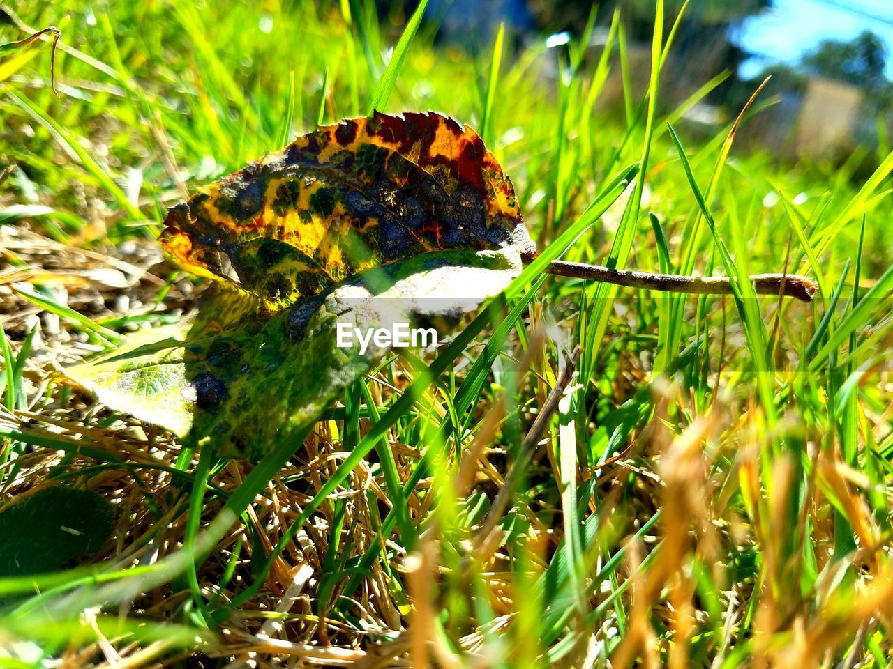 nature, grass, insect, animals in the wild, one animal, growth, animal themes, wildlife, beauty in nature, green color, plant, no people, outdoors, field, close-up, fragility, day, butterfly - insect, flower, freshness