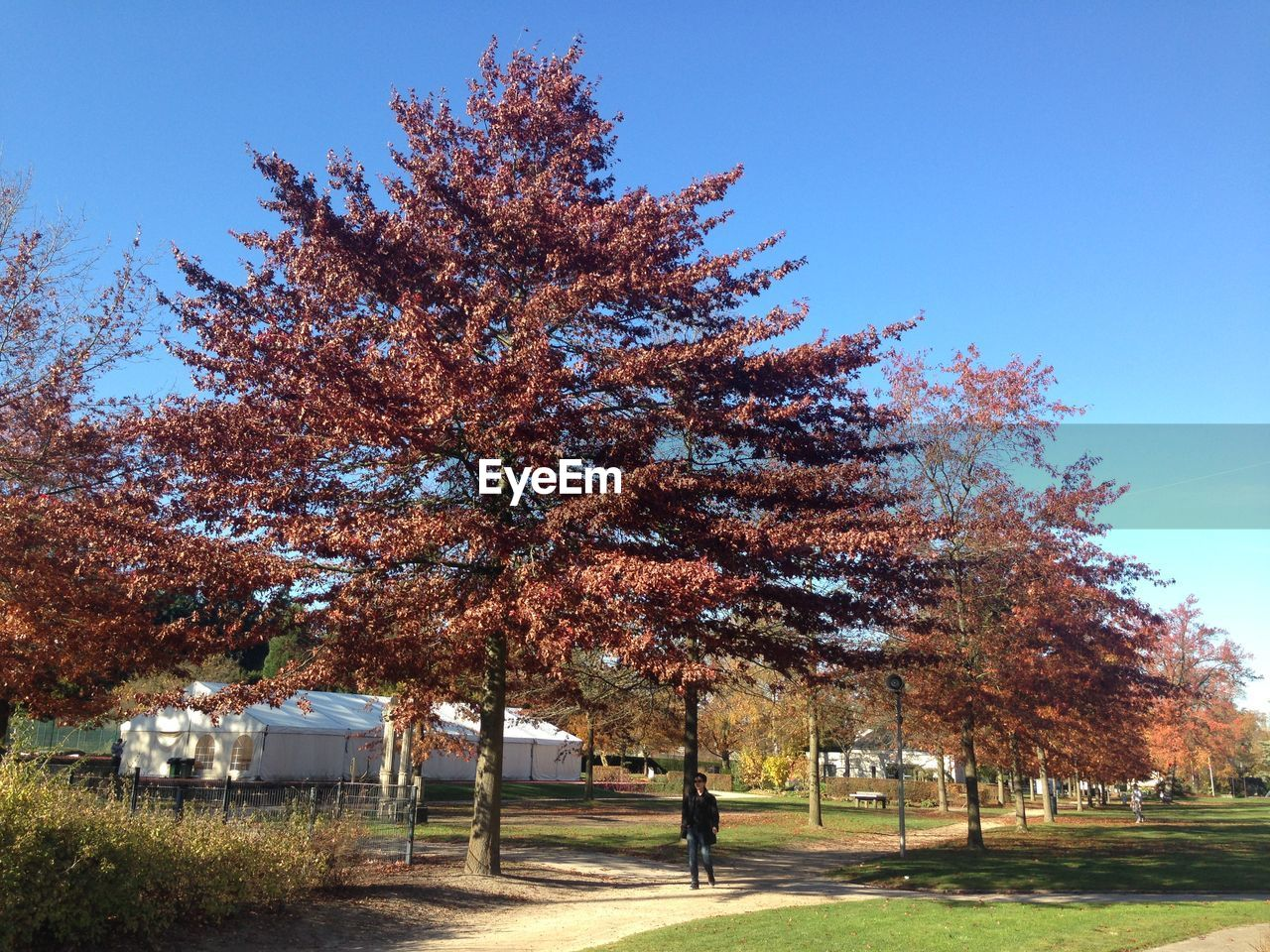 Trees growing at park during autumn