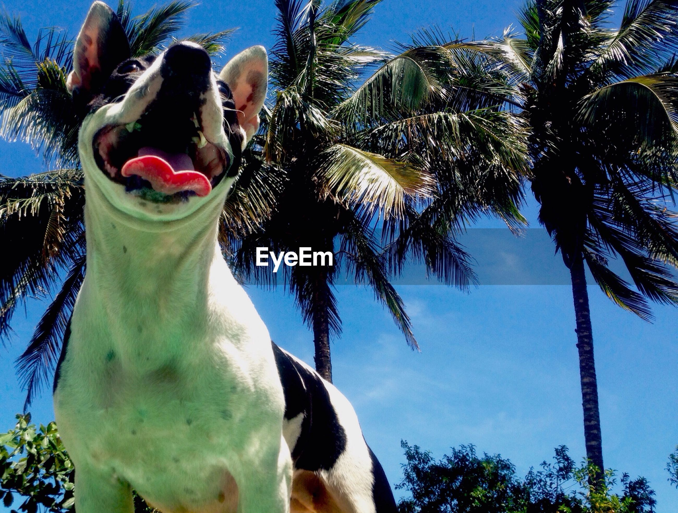 Low angle view of dog against coconut palm trees