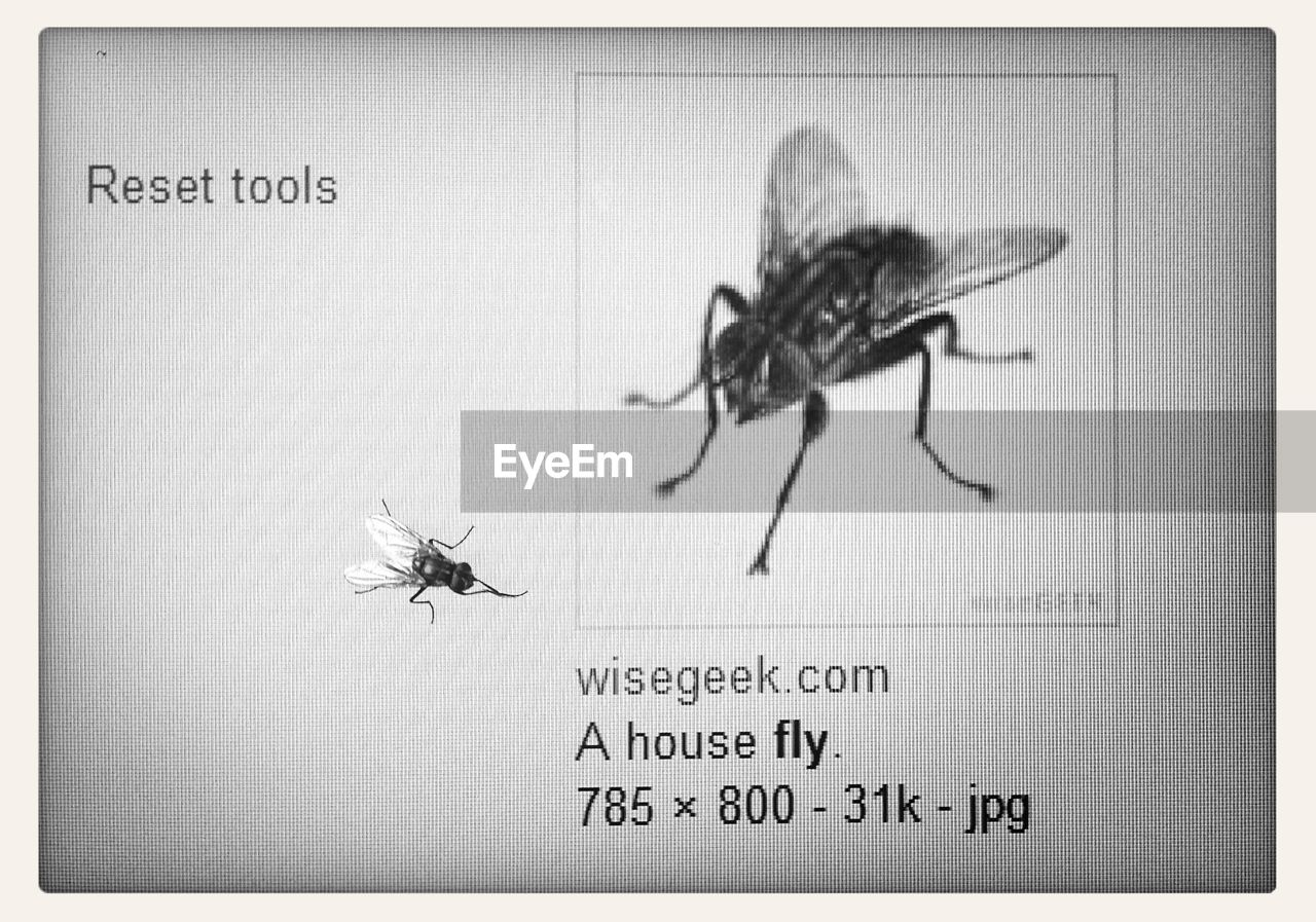 insect, animal themes, close-up, one animal, animals in the wild, communication, no people, full length, day, indoors