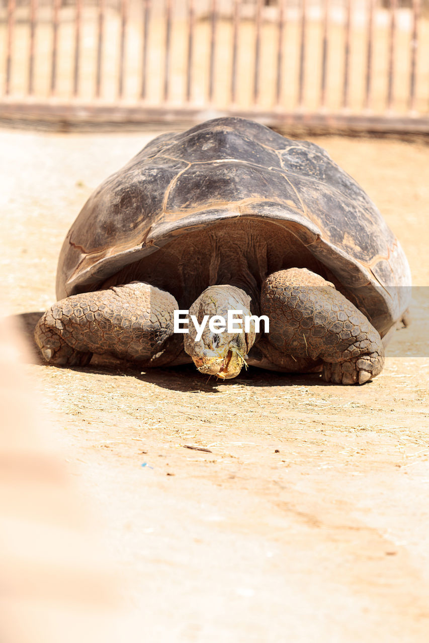tortoise, reptile, animal shell, tortoise shell, animal themes, animals in the wild, turtle, one animal, animal wildlife, wildlife, no people, nature, day, pets, close-up, outdoors, sea turtle