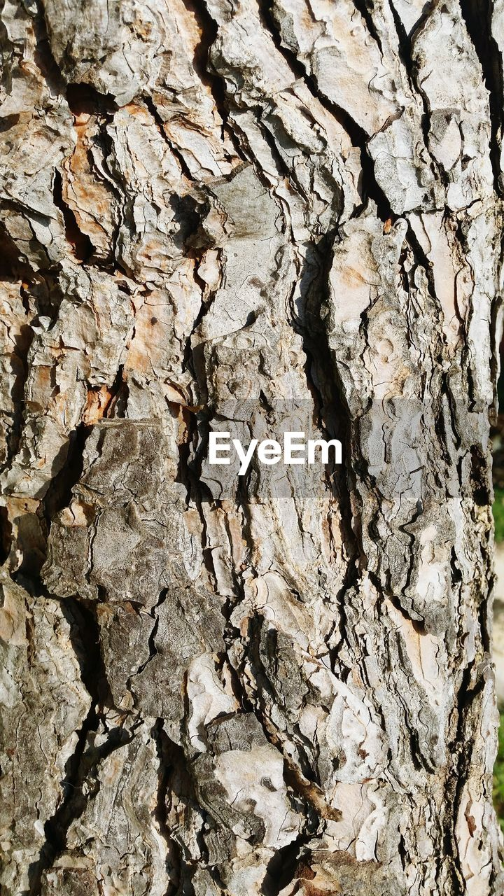 textured, backgrounds, tree trunk, full frame, rough, cracked, no people, bark, wood - material, tree, close-up, pattern, day, nature, outdoors
