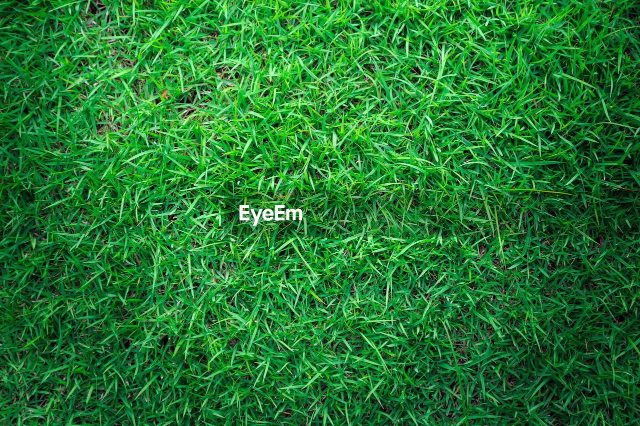 grass, green color, backgrounds, full frame, field, nature, outdoors, no people, growth, day, close-up
