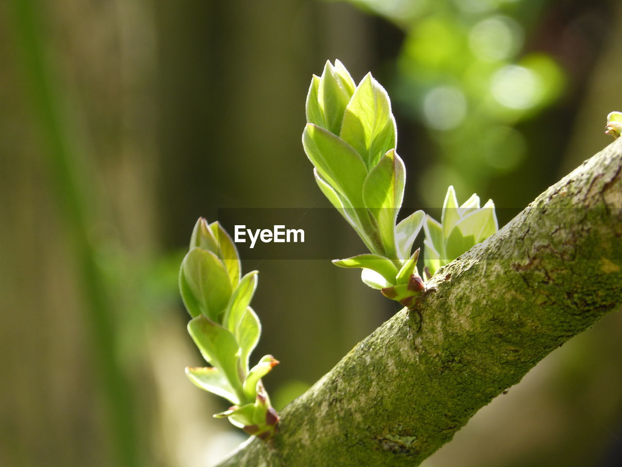 growth, nature, focus on foreground, green color, day, no people, outdoors, plant, close-up, beauty in nature, animal themes