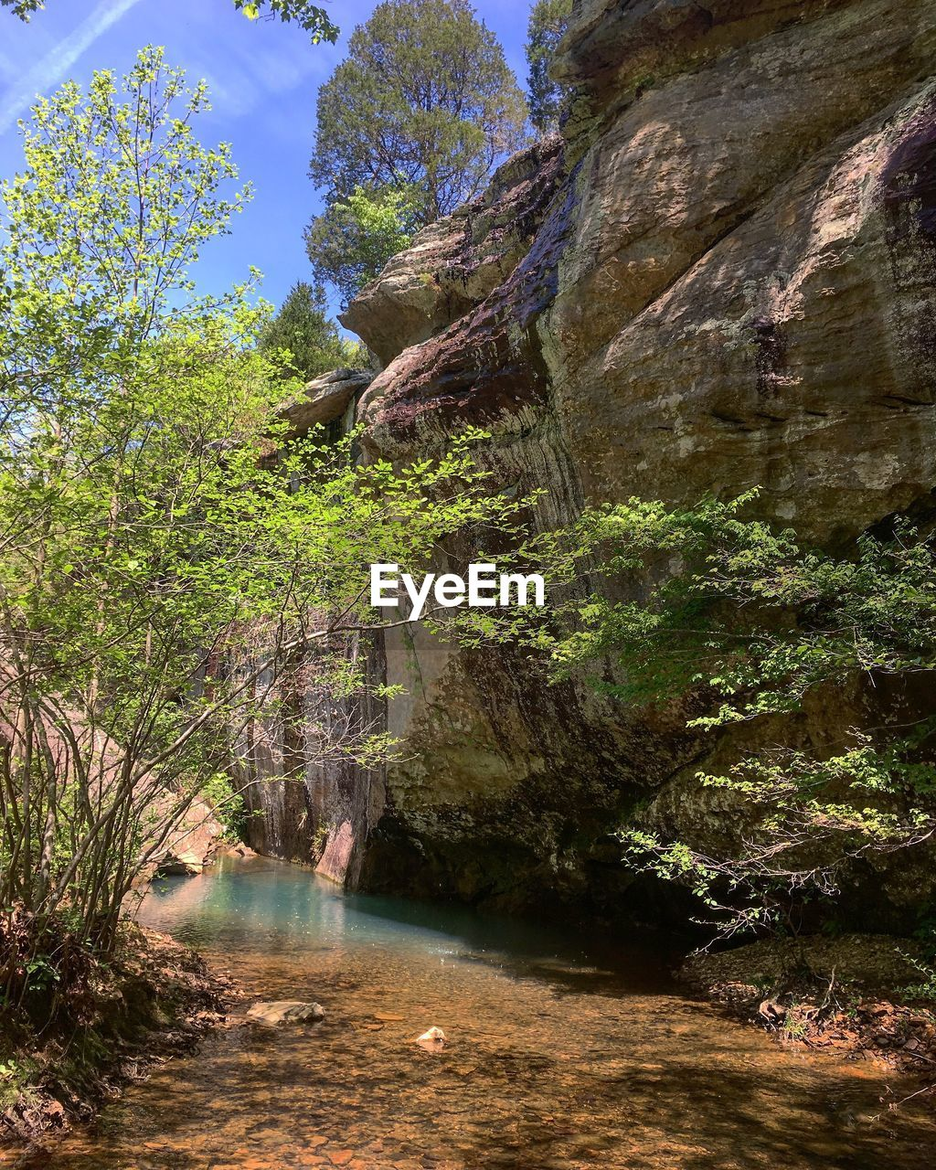 tree, water, plant, rock, tranquility, nature, rock - object, scenics - nature, forest, beauty in nature, day, tranquil scene, solid, land, rock formation, growth, river, non-urban scene, no people, outdoors, flowing water, flowing