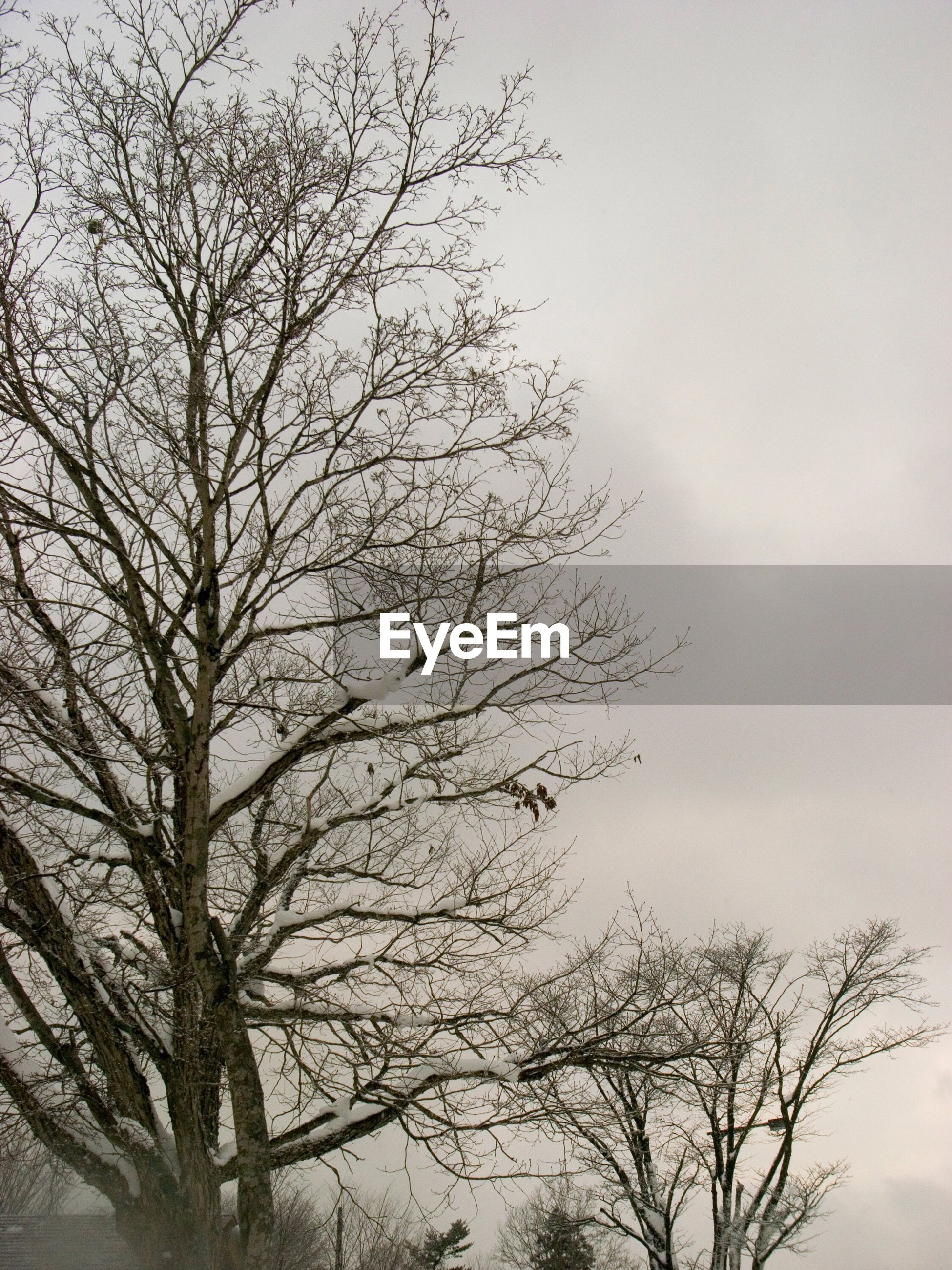 CLOSE-UP LOW ANGLE VIEW OF BARE TREE AGAINST SKY