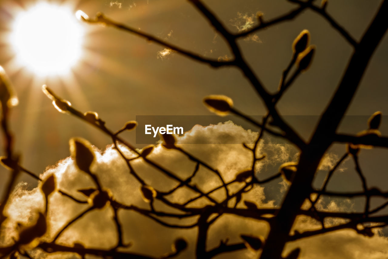 nature, beauty in nature, branch, growth, sunlight, no people, close-up, focus on foreground, outdoors, plant, sun, day, tree, freshness, sky, water, fragility