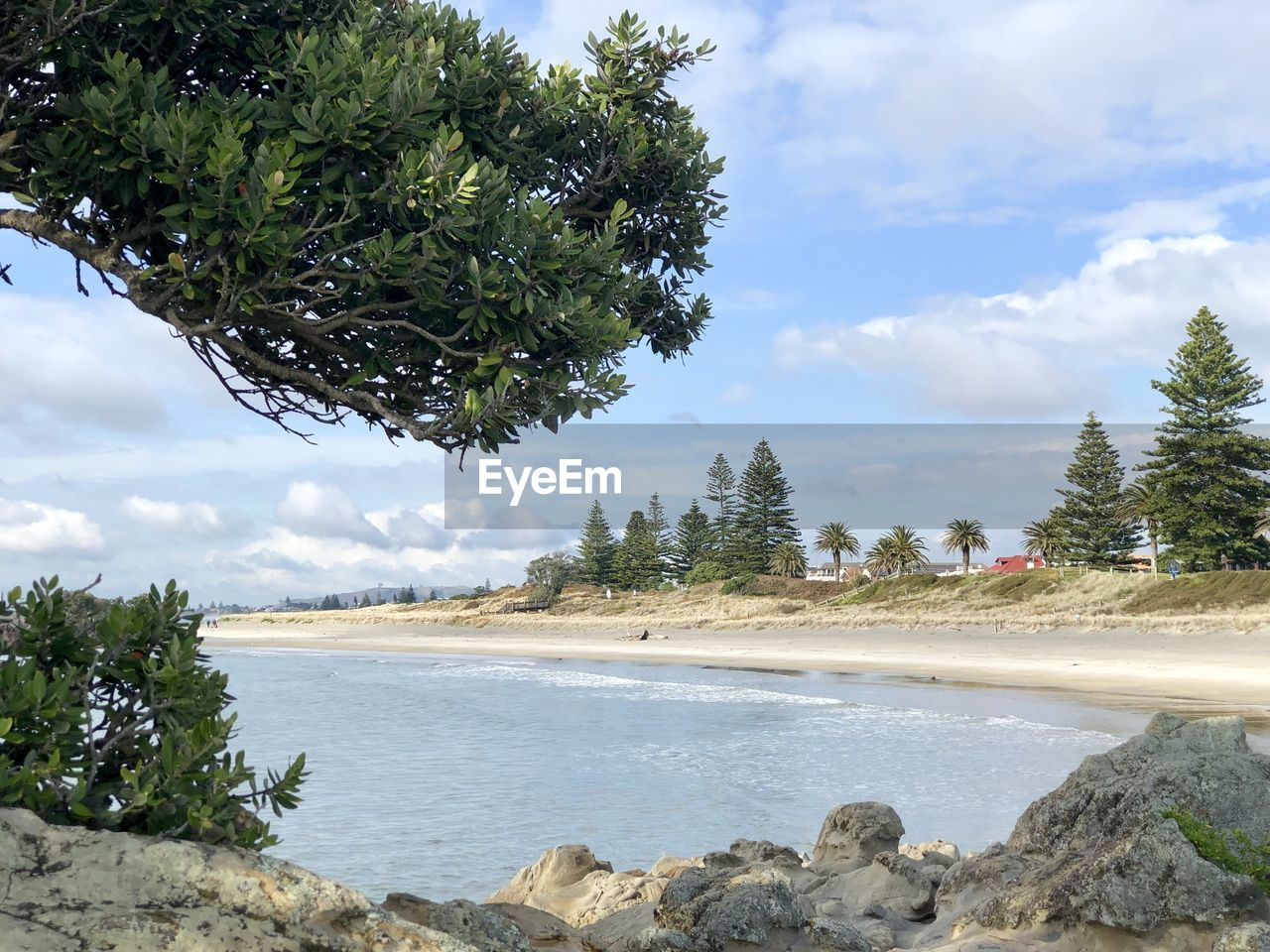 tree, plant, water, sky, cloud - sky, beauty in nature, scenics - nature, nature, day, tranquil scene, growth, land, tranquility, non-urban scene, green color, no people, beach, sea, outdoors