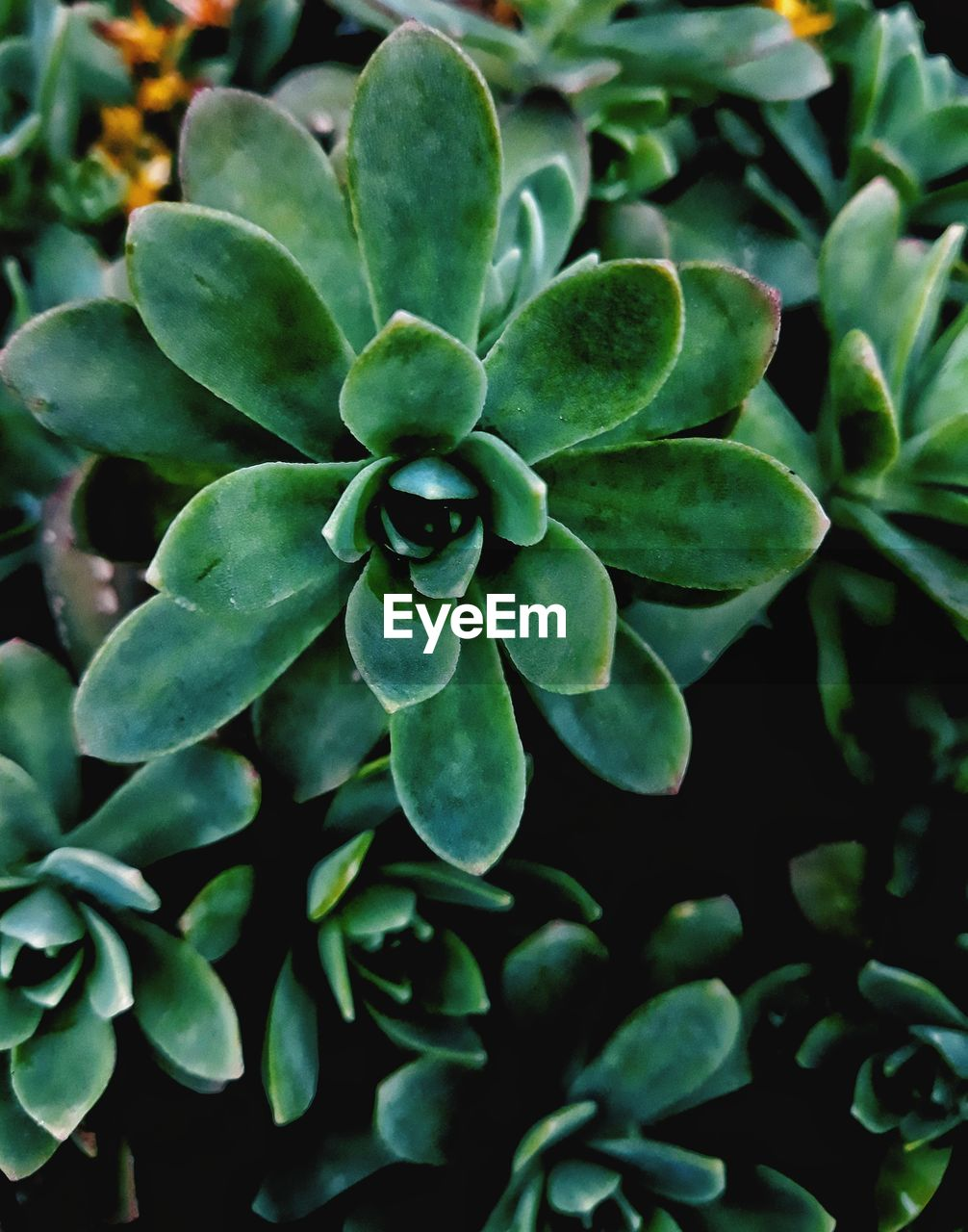 growth, plant, plant part, leaf, close-up, green color, beauty in nature, nature, no people, day, freshness, focus on foreground, outdoors, high angle view, tranquility, succulent plant, selective focus, fragility, vulnerability, directly above