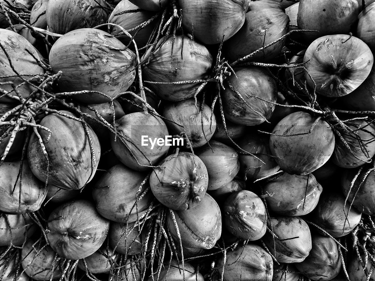 Black and white coconut black and white photography on eyeem