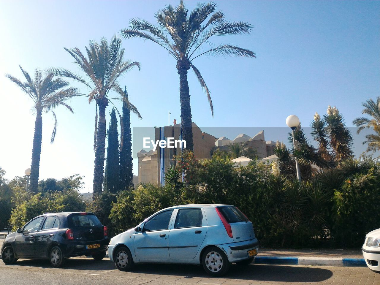 palm tree, tree, car, built structure, day, transportation, no people, outdoors, architecture, building exterior, city, sky
