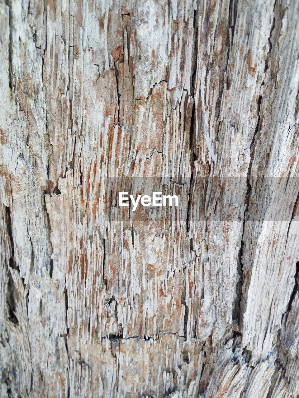 textured, wood - material, nature, backgrounds, close-up, no people, outdoors, day