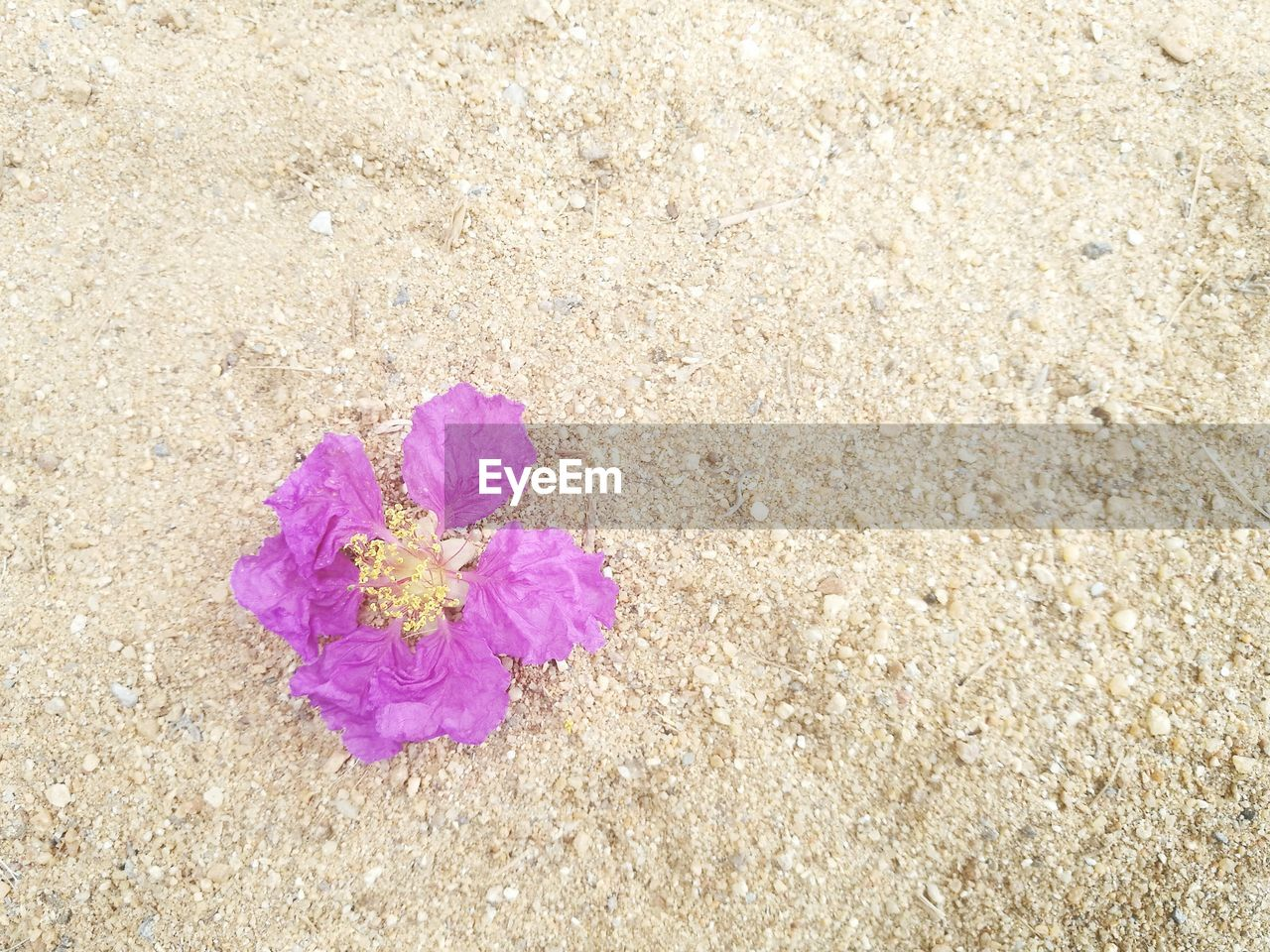 flower, nature, no people, outdoors, pink color, plant, fragility, beauty in nature, day, growth, flower head, blooming, close-up, freshness