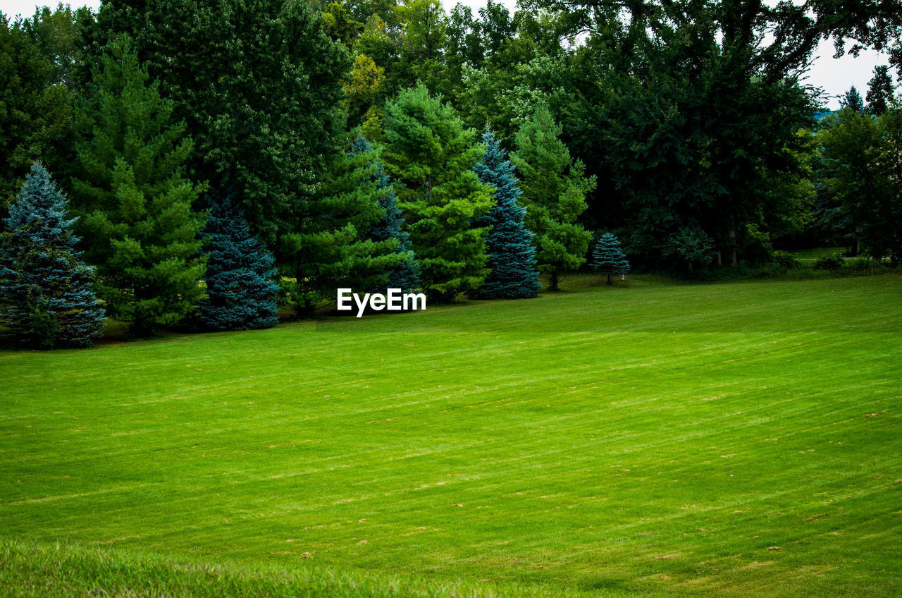 plant, tree, green color, grass, nature, beauty in nature, tranquil scene, growth, tranquility, scenics - nature, no people, day, land, foliage, landscape, environment, lush foliage, park, lawn, idyllic, outdoors, woodland, evergreen tree, ornamental garden