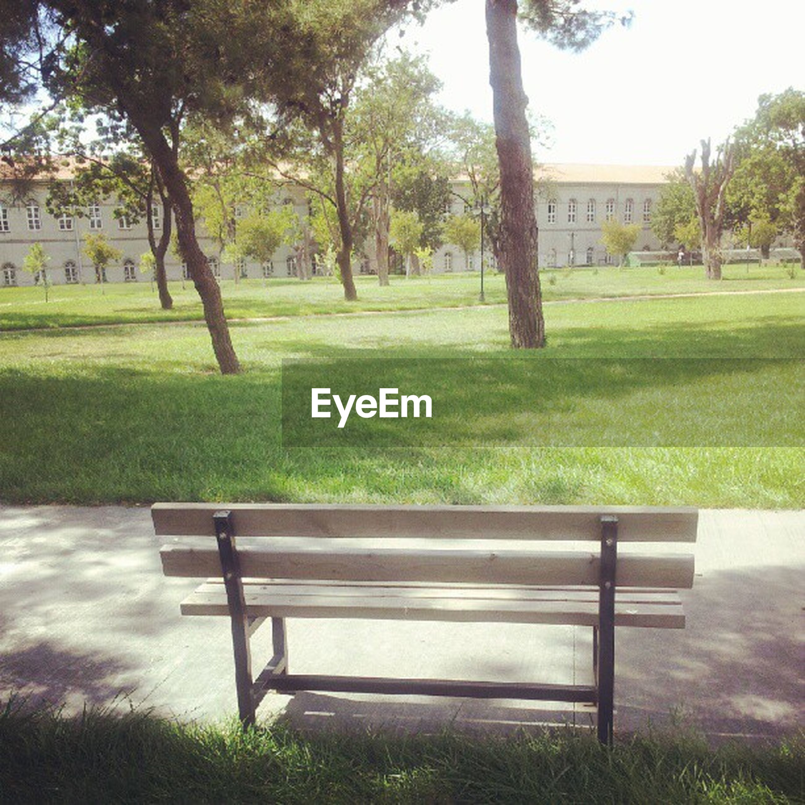 grass, bench, tree, empty, green color, lawn, park - man made space, park bench, absence, chair, tranquility, field, grassy, growth, park, tranquil scene, nature, seat, sunlight, shadow