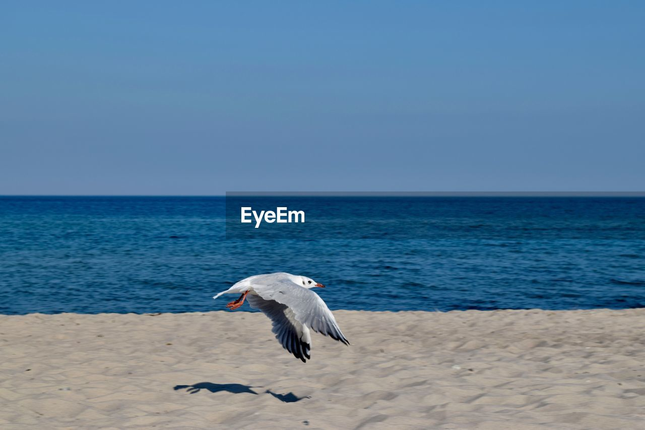 Seagull flying over beach against blue sky