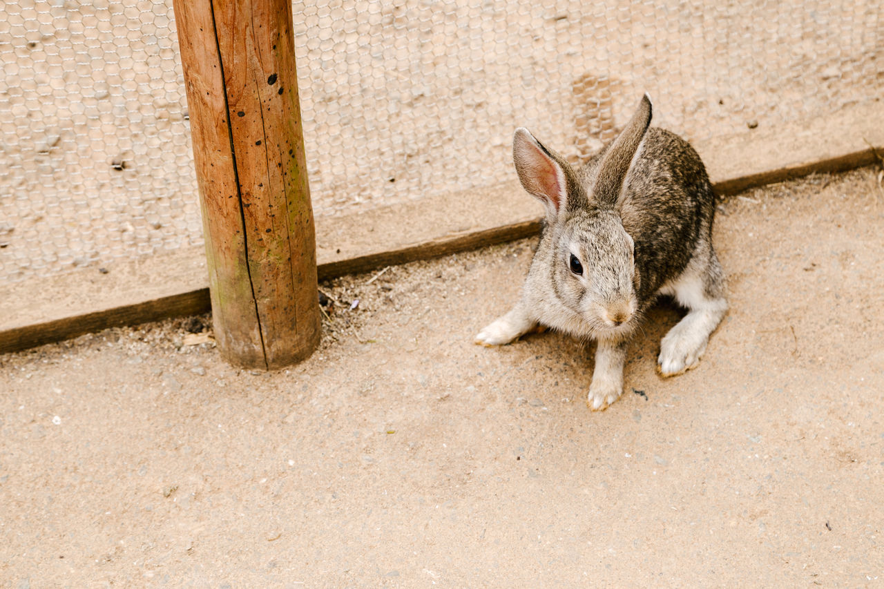 one animal, animal themes, day, no people, outdoors, mammal, animals in the wild, domestic animals, close-up