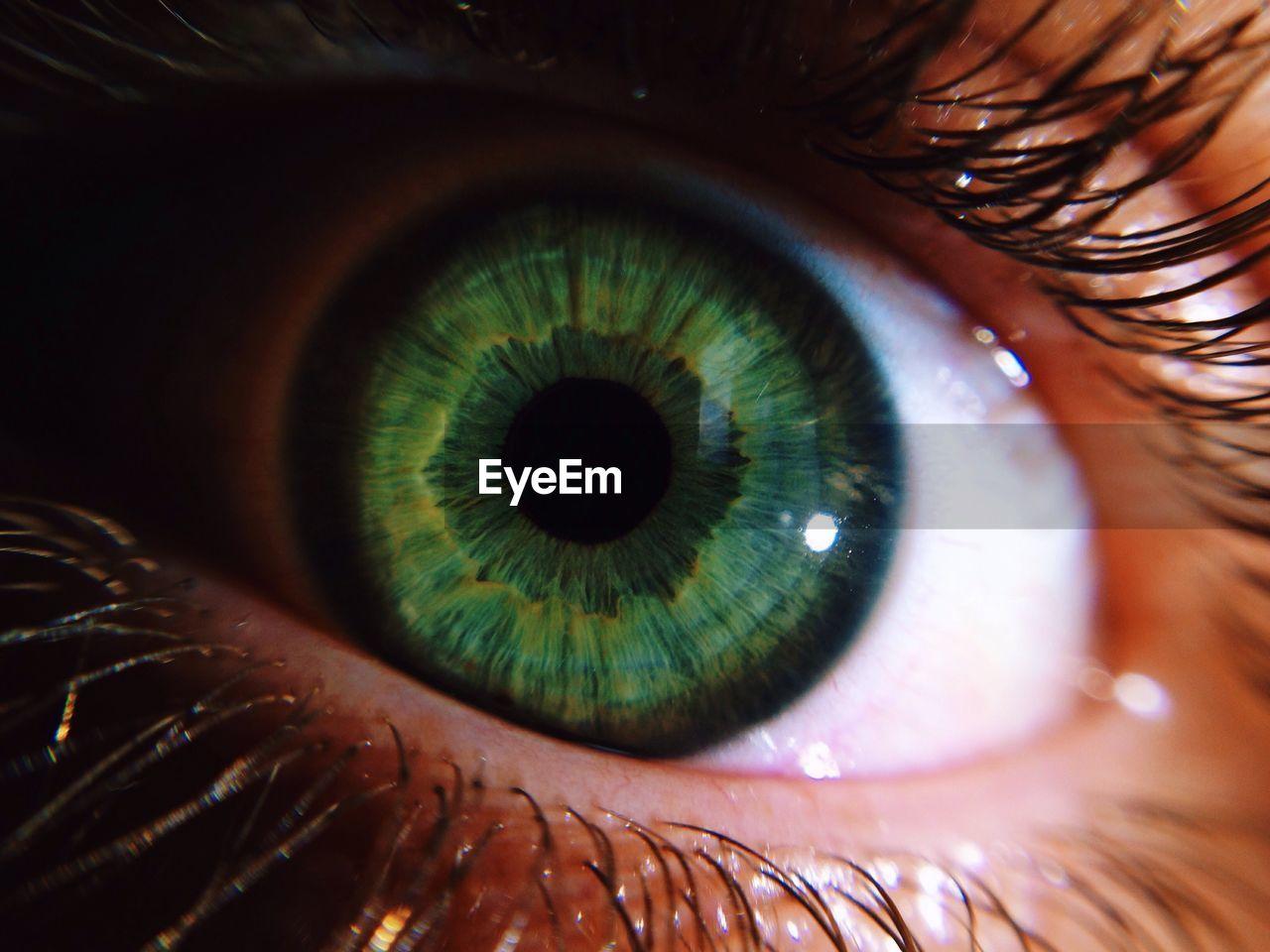 human eye, eyelash, eyesight, real people, one person, sensory perception, eyeball, human body part, close-up, looking at camera, iris - eye, indoors, portrait, day, people
