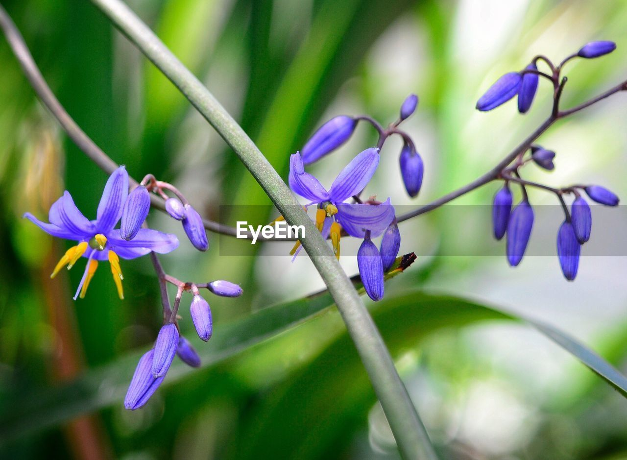 flowering plant, plant, flower, purple, growth, beauty in nature, vulnerability, fragility, close-up, freshness, petal, flower head, inflorescence, selective focus, nature, day, no people, focus on foreground, botany, plant stem