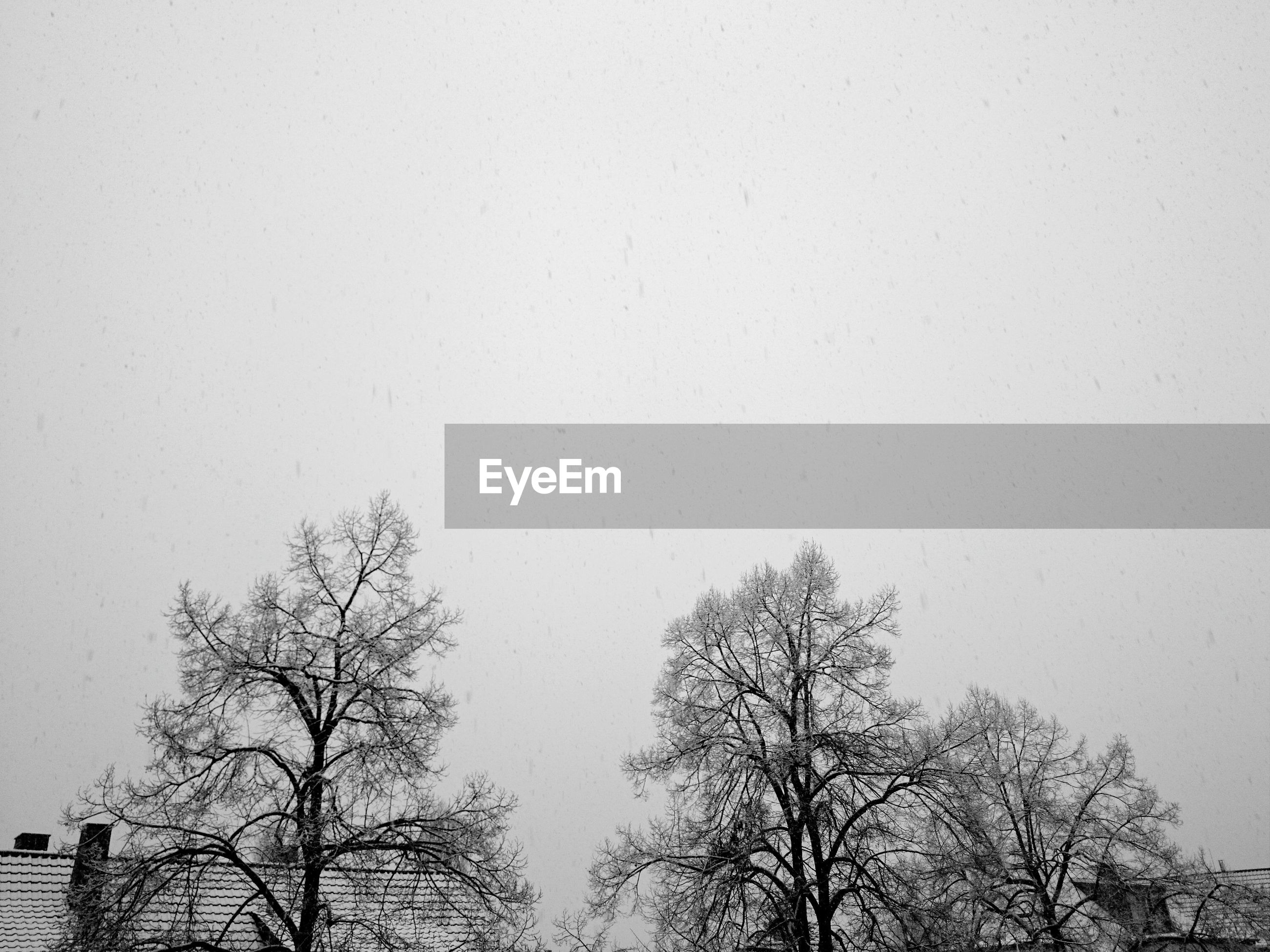 Frozen bare trees against clear sky