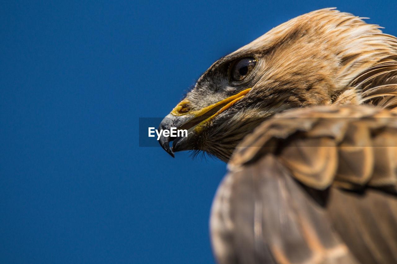 Detail Shot Of An Eagle