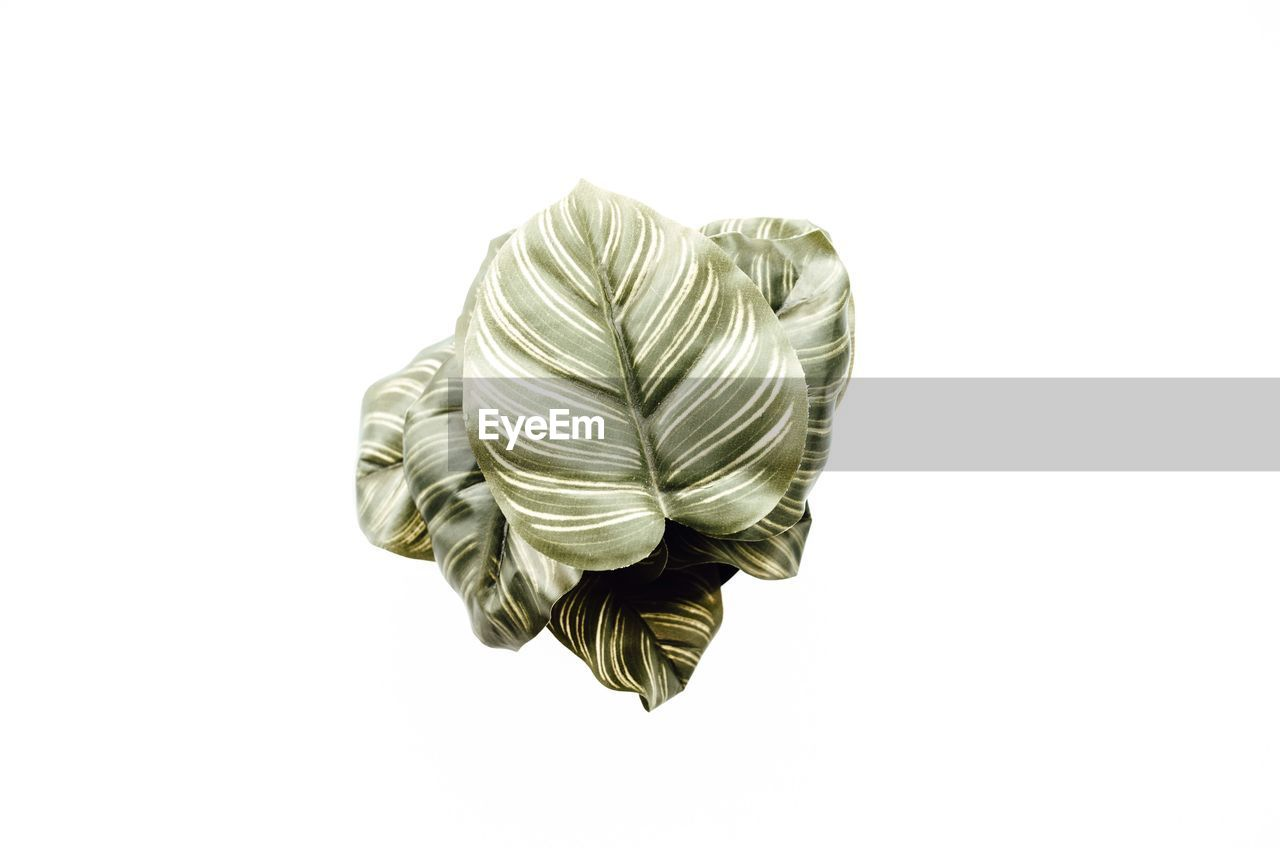 High angle view of plant on white background