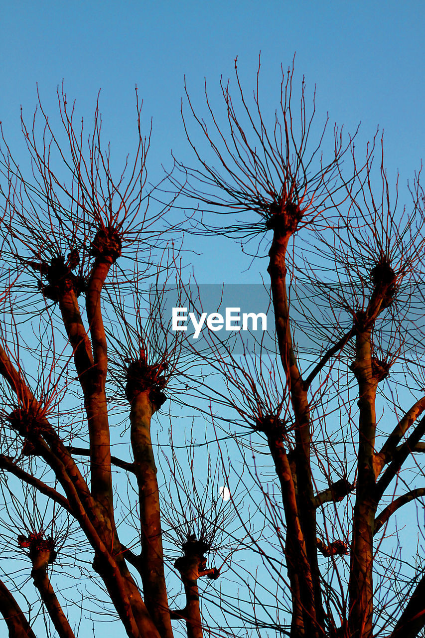 low angle view, tree, bare tree, branch, nature, no people, day, outdoors, sky, beauty in nature, clear sky
