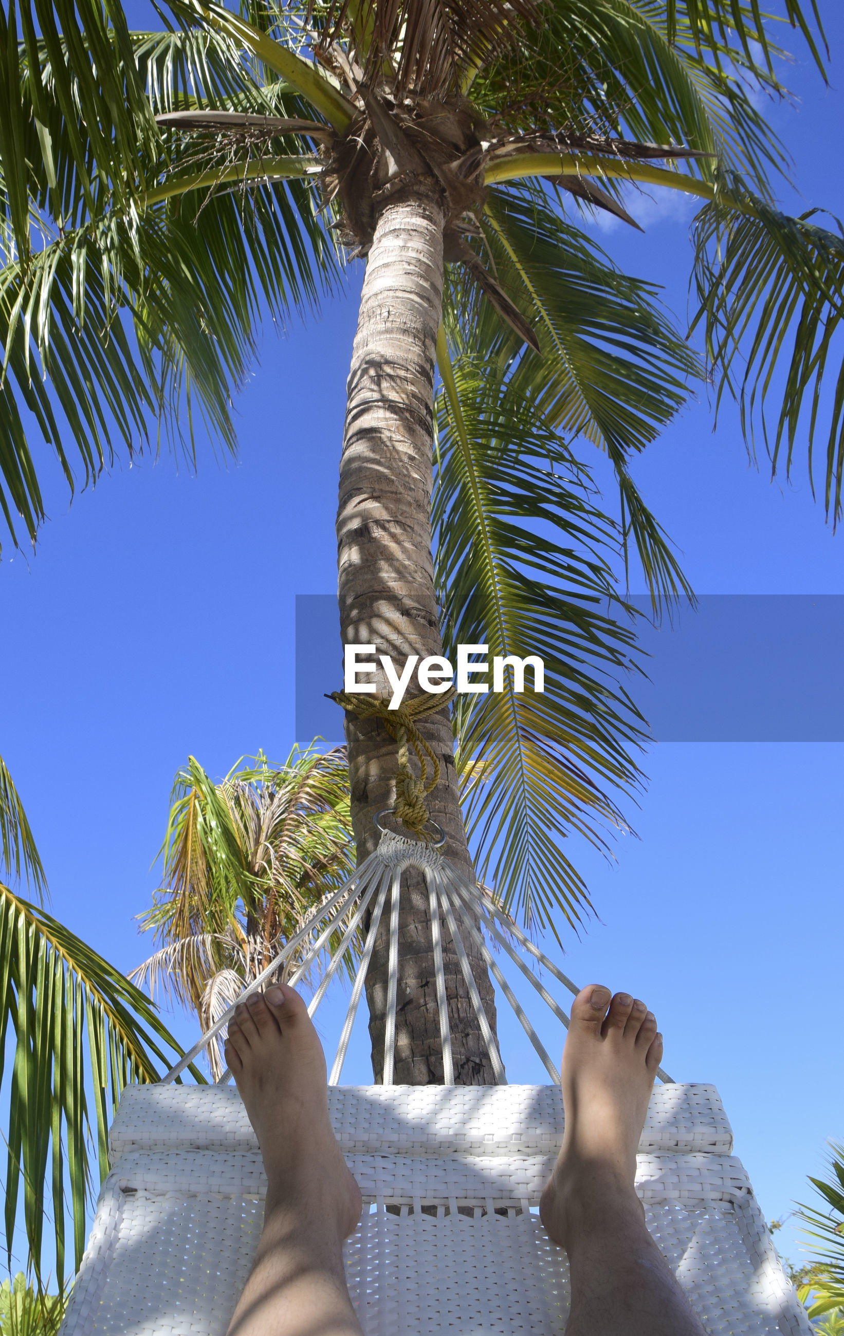 Low section of person lying in hammock against palm trees