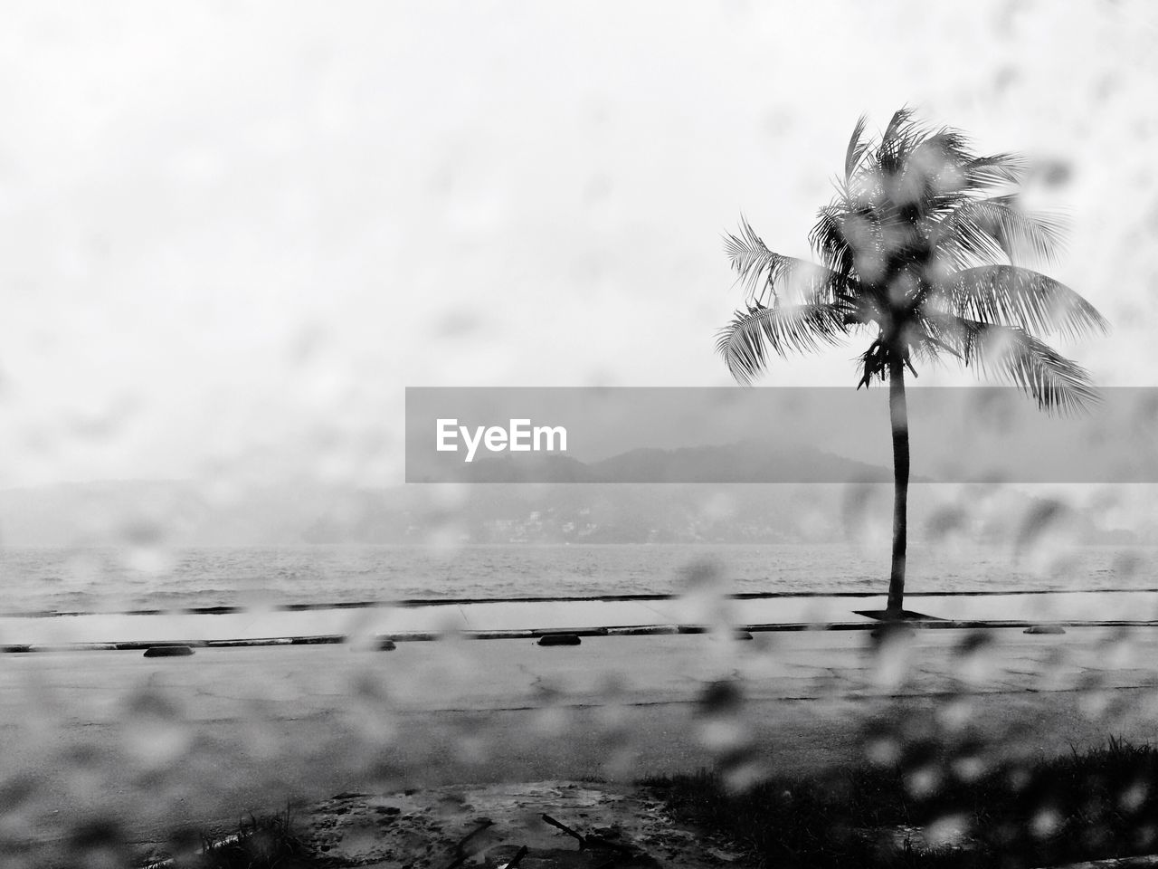 nature, water, beauty in nature, outdoors, flower, day, no people, tranquility, scenics, fragility, growth, sky, tree, palm tree, close-up