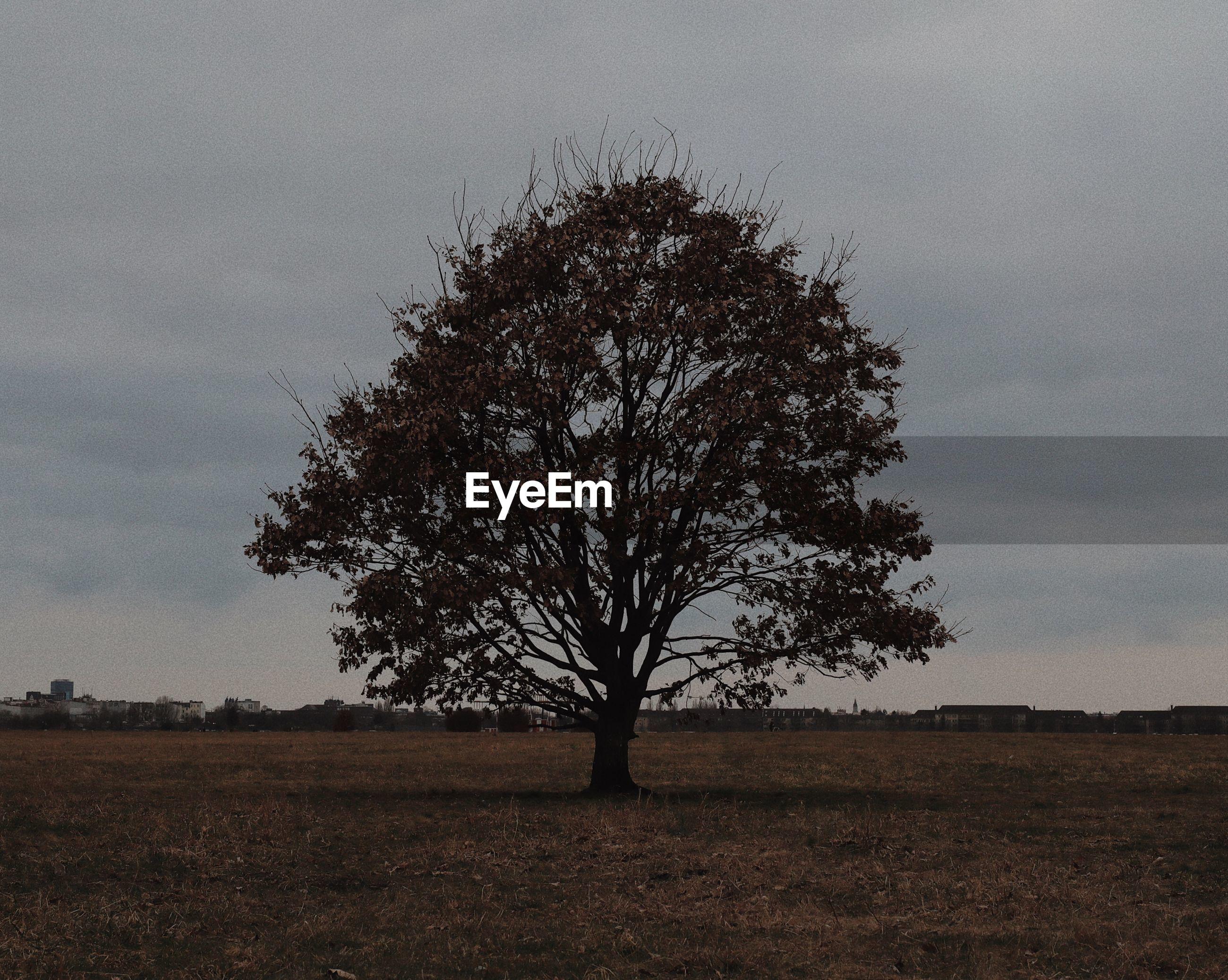TREE ON LANDSCAPE AGAINST SKY